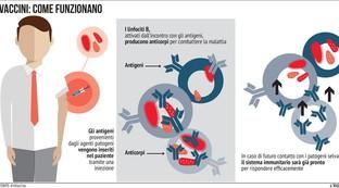 Come funziona un vaccino nell'uomo