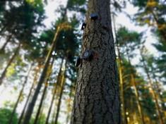 Giornata mondiale dell'ambiente, in Umbria la foresta parlante racconta lo stato di salute del Pianeta