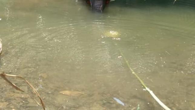 India, elefantessa uccisa da un ananas imbottito di petardi