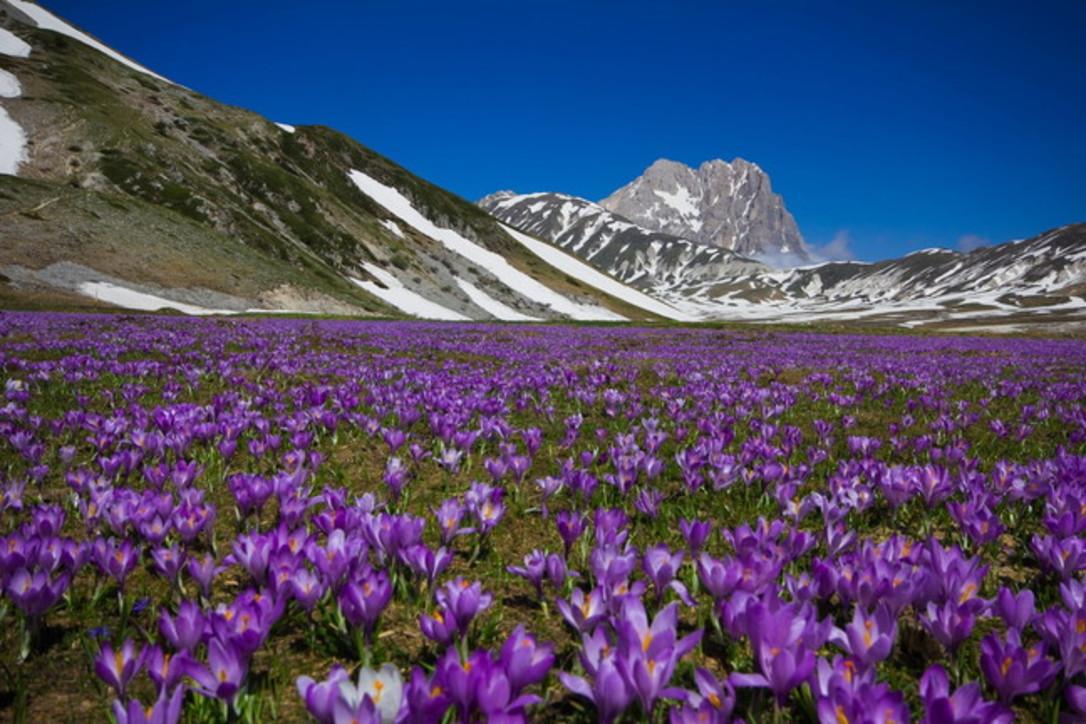 In Abruzzo il 75% delle specie animali e vegetali d'Europa