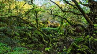 Lazio: Bosco del Sasseto, la magia di una foresta fatata