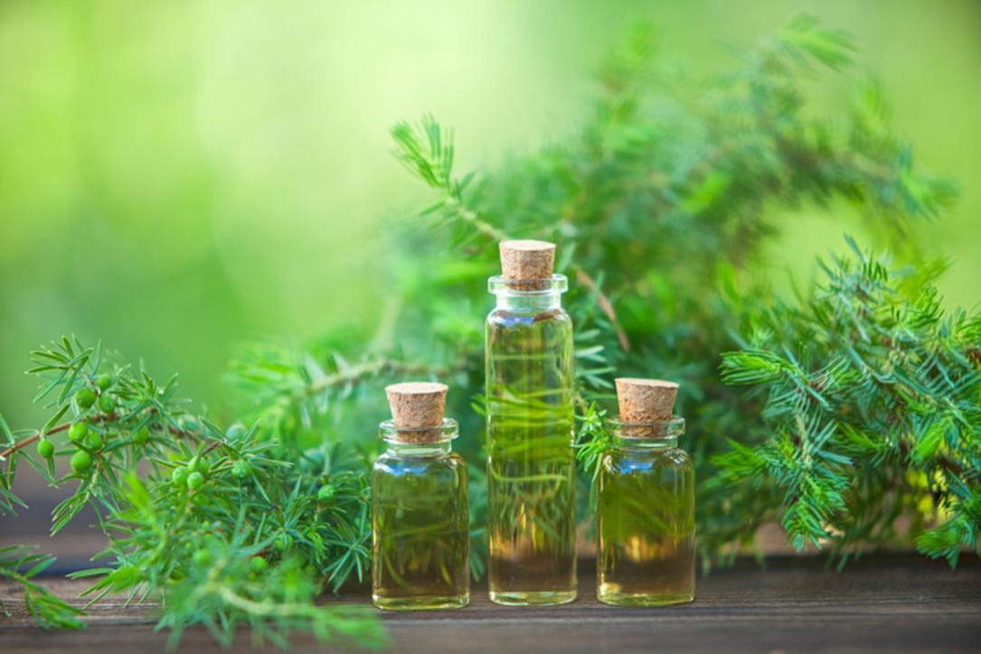 Tea tree oil, un piccolo concentrato di virtù da tenere sempre in borsetta