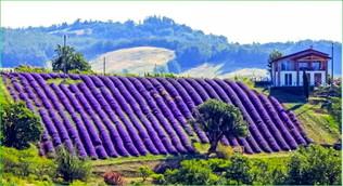 Monferrato e la lavanda: tutte le sfumature del viola