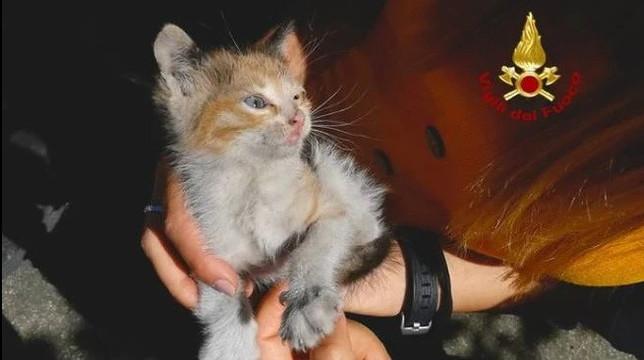 Da Pistoia a Bologna incastrato nel parafango di un'auto: gattino salvato dai vigili del fuoco