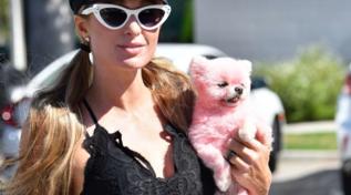 L'ultima follia di Paris Hilton? Colora anche il cane... di rosa