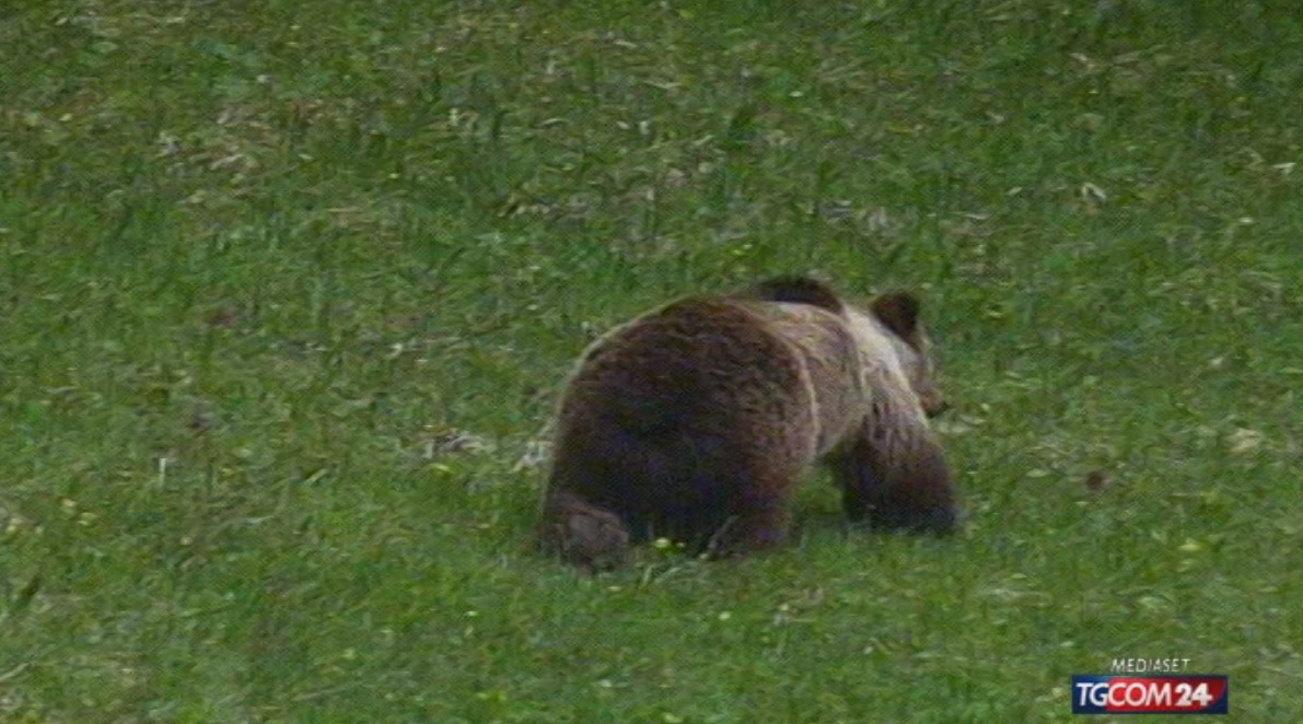 Trentino, accolto il ricorso contro l'uccisione dell'orsa Gaia ...