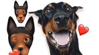 Le PETmoji, gli avatar dei nostri animali