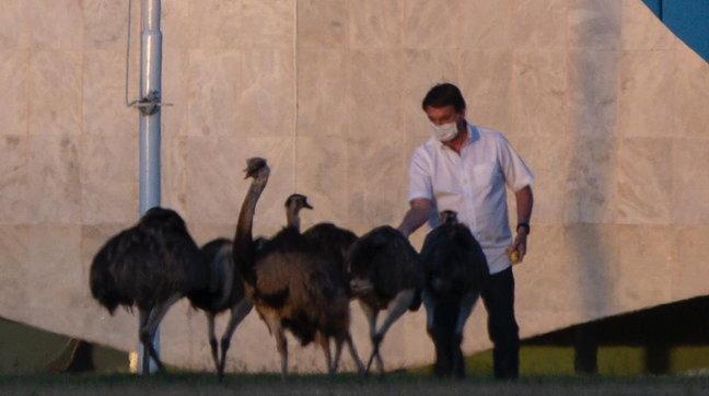 Bolsonaro beccato da un uccello mentre cercava di dargli da mangiare durante la quarantena