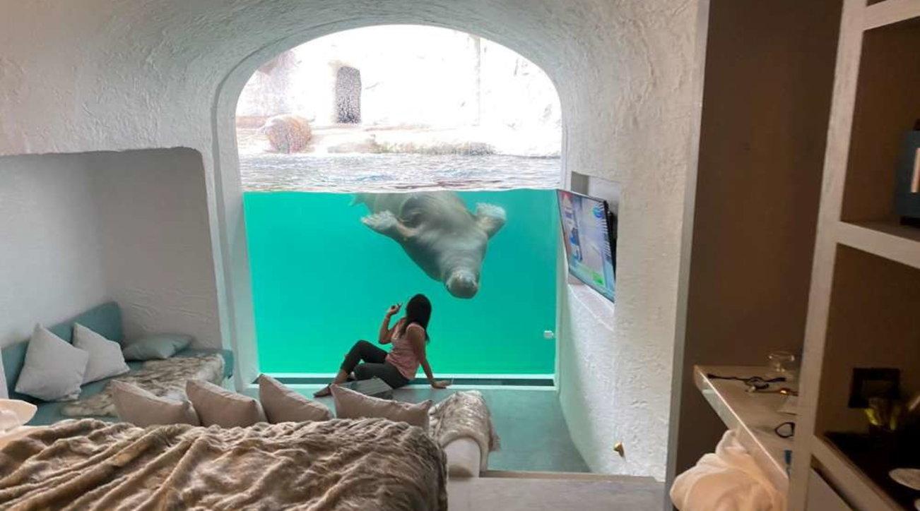 Belgio, il resort all'interno di uno zoo: camere con vista su orsi, lupi e trichechi