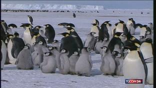 Antartide, scoperte 11 colonie di pinguini imperatore