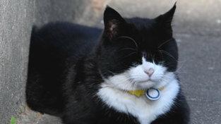 """Va in pensione il gatto Palmerston, """"acchiappatopi"""" del ministero degli Esteri britannico"""