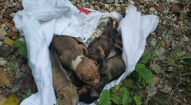 Pesaro, vanno in cerca di tartufi e trovano quattro cuccioli di cane in un sacco dell'immondizia