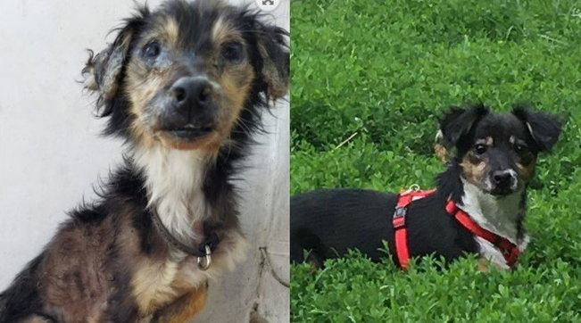 Abbandonato nel lockdown dalla sua famiglia in fuga, il cane Libero ce l'ha fatta e ha una nuova casa
