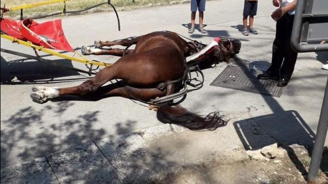 """Cavallo stramazza al suolo nella Reggia di Caserta, è bufera sui social: """"Basta, è vergognoso"""""""