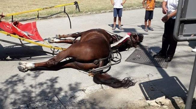 Cavallo stramazza al suolo nella Reggia di Caserta: è bufera sui social