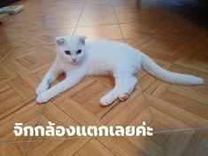 Videogiochi: le foto del gattoche ricorda Pikachu