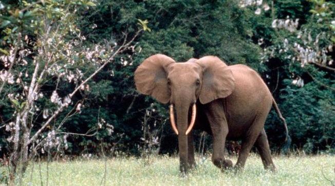 Wwf: in 50 anni persi oltre i due terzi della fauna selvatica