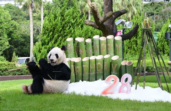 Giappone, festa di compleanno per il panda più anziano del mondo