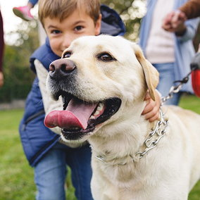 Vota l'adozione più bella: un concorso per cani, gatti… e umani