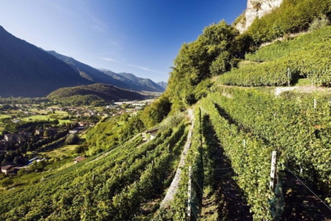 """La provincia di Brescia, un territorio """"di Vino"""""""