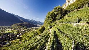 Provincia di Brescia da scoprire: terra di grandi vini