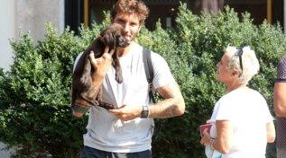 Stefano De Martino compra un cagnolino per Santiago