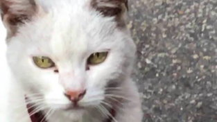 Lilla come Hachiko: la gatta che aspetta davanti al supermercato la padrona che non c'è più
