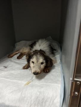 Pisa, cane gettato vivo nella spazzatura