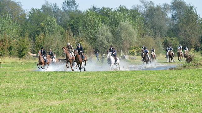 Novara: Cavalli e non solo