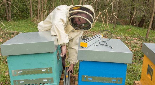 Adotta un alveare e ricevi il miele a casa: l'iniziativa che ha già salvato 9 milioni di api