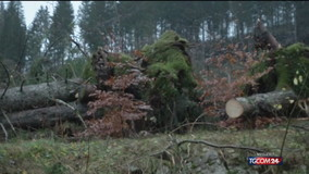 Asiago, il cimitero degli alberi caduti sull'Altopiano