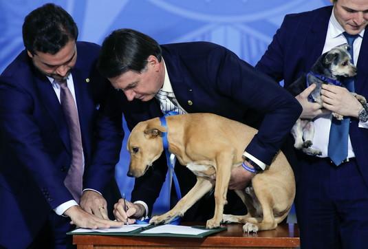 Brasile, Bolsonaroinasprisce le pene per chi maltratta gli animali: la legge la firma...un cane