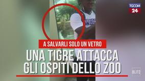 Usa, una tigre attacca gli ospiti dello zoo