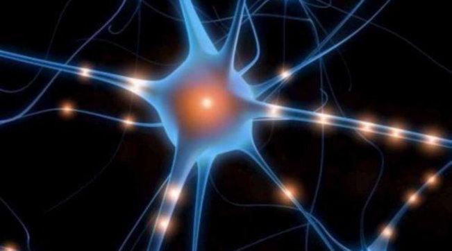 Ercolano, scoperti neuroni integri nel cervello di una vittima dell'eruzione del 79 d.C.