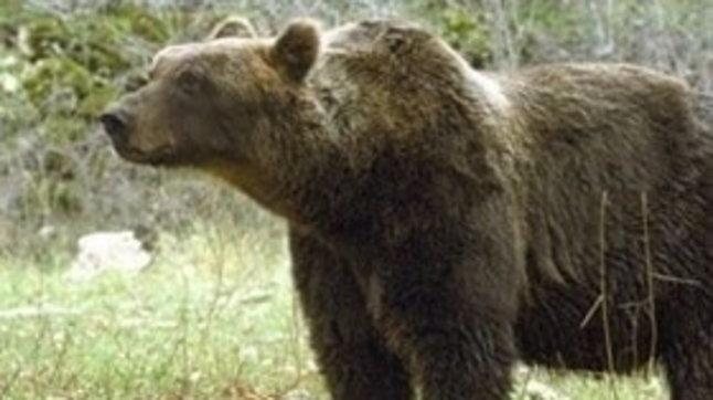 Trento,Consiglio di Stato: l'orsa JJ4 torna libera, accolto il ricorso