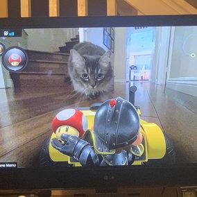 Mario Kart Live: Home Circuit è il gioco più amato dai gatti