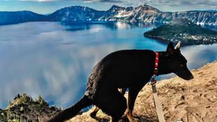 Pooping Pooches, il calendariodei cani che fanno i bisogni nei luoghi più spettacolari d'America