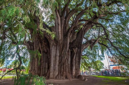 Da tutto il mondo, gli alberi capolavoro