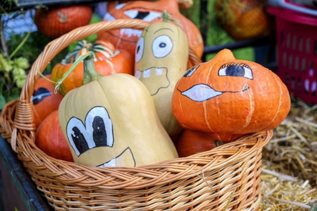 Zucca: la grande protagonista di Halloween