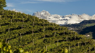 Alto Adige: sei imperdibili itinerari tra i vigneti