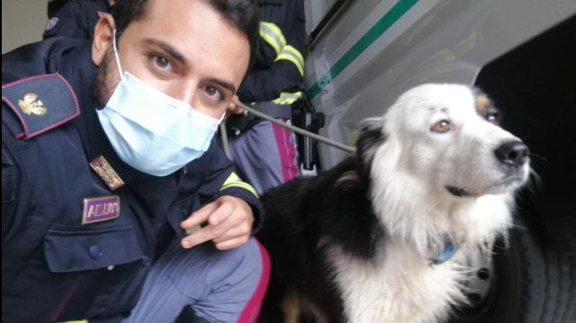 In fuga d'amore lungo la A1, pastore australiano salvato dalla Polstrada