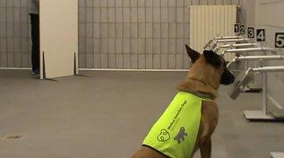 """Covid e tracciamento, i cani possono aiutarci: ecco il test con Nala a """"Le Iene"""""""