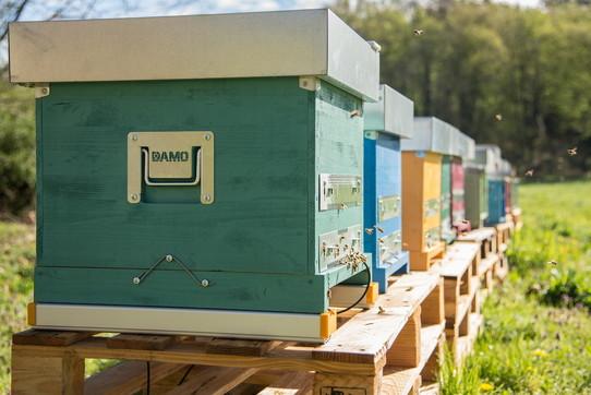 3Bee, tecnologia per le api