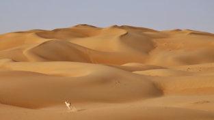 Donnavventura: Abu dhabi, tra grattacieli, deserto e animali straordinari