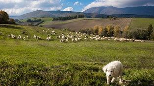 Marche: andare per abbazie nella provincia di Macerata