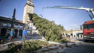 Arriva da Gorno l'albero di Natale per la città di Bergamo