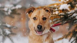 Pet Astrology: come sarà il mese di dicembre per il tuo cane