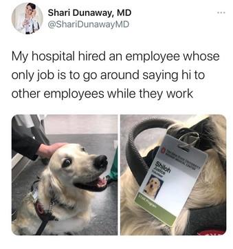 Grazie a uno scatto rubato, il cucciolo Shiloh diventa la star dell'Ohio State University Wexner Medical Center
