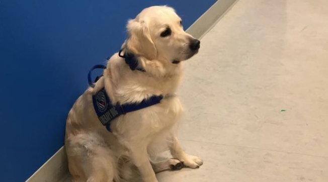 """Usa, lo scatto """"rubato"""" del nuovo cane assunto in ospedale per la pet therapylo rende una star"""