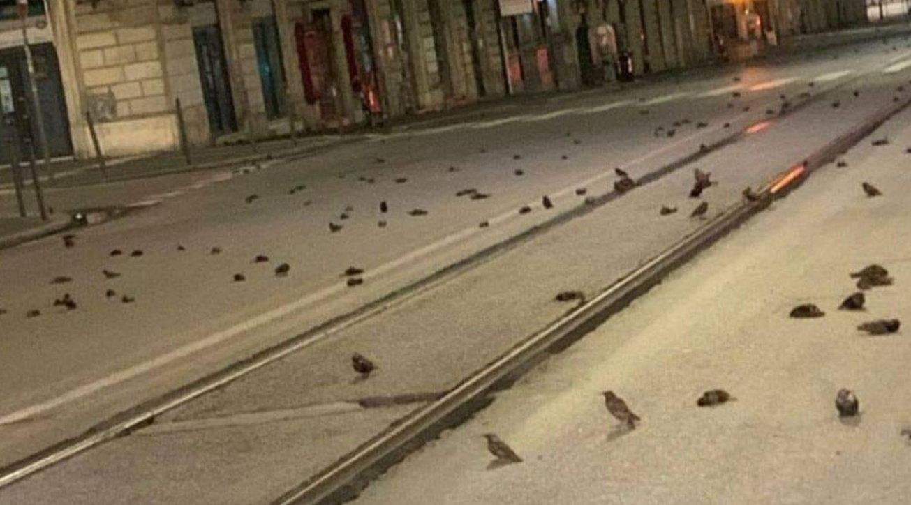 Botti di Capodanno, a Roma è strage di passerotti: centinaia sull'asfalto di via Cavour